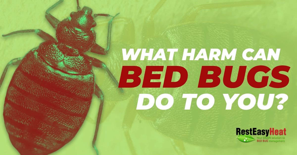 The harm bed bugs do to you